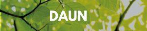 perbedaan daun dikotil dan monokotil